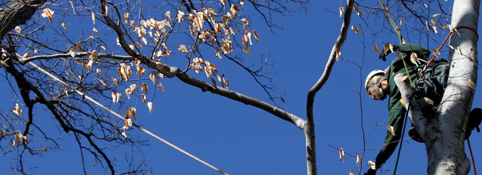 Tree Pruning Mobile, Alabama