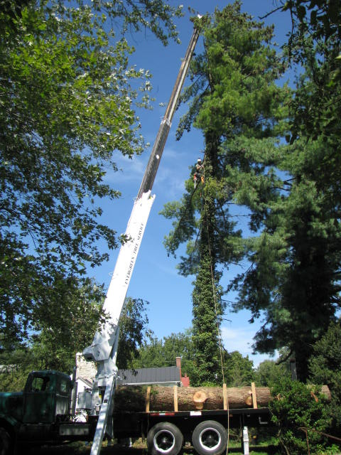 Tree Removal Mobile Alabama
