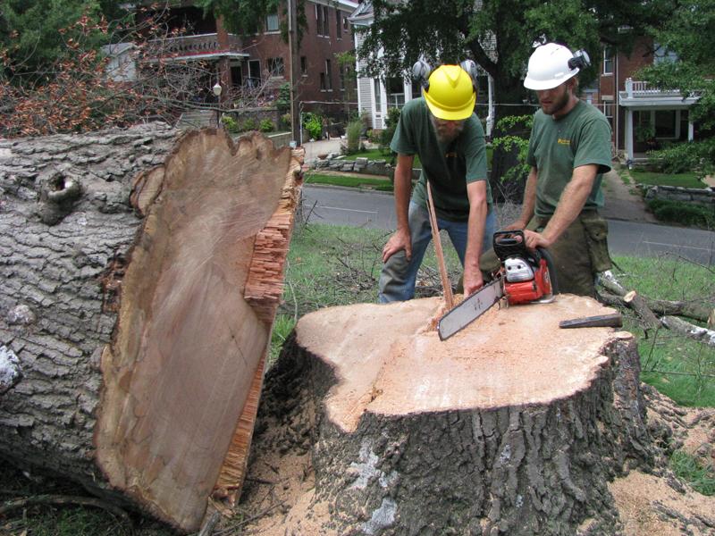 Tree Removal Mobile, Alabama