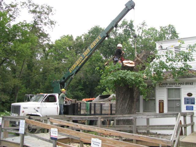 Municipal Tree Removal Mobile, Alabama