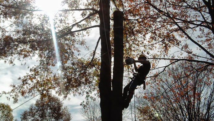Profressional Tree Services Mobile Alabama